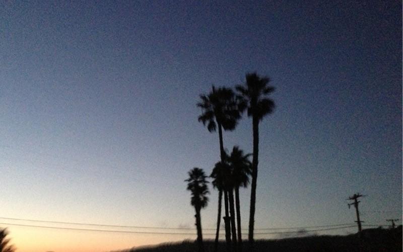 Halbinsel Palos Verdes Palmen Los Angeles