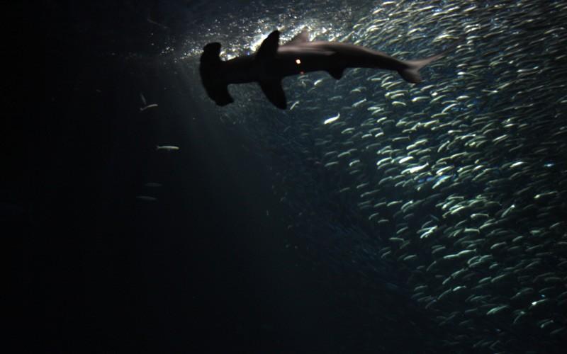 Monterey Bay Aquarium Ausflugsziel Rundreise Kalifornien