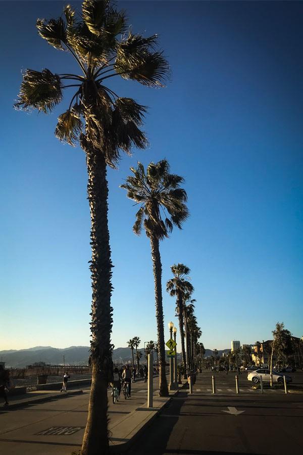 Palmenreihe in Santa Monica