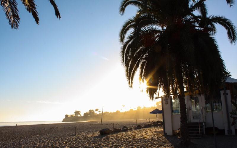 Palmen am Leadbetter Beach