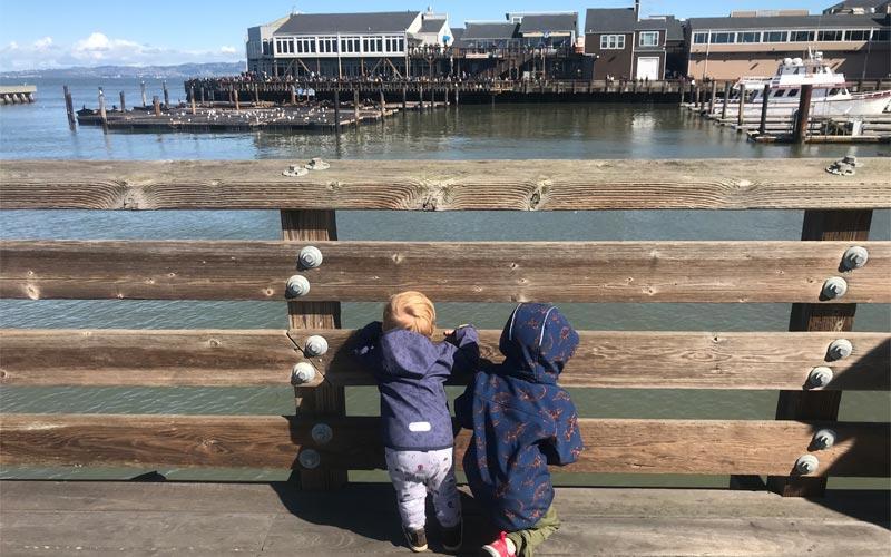 Blick auf die Seelöwen in San Francisco
