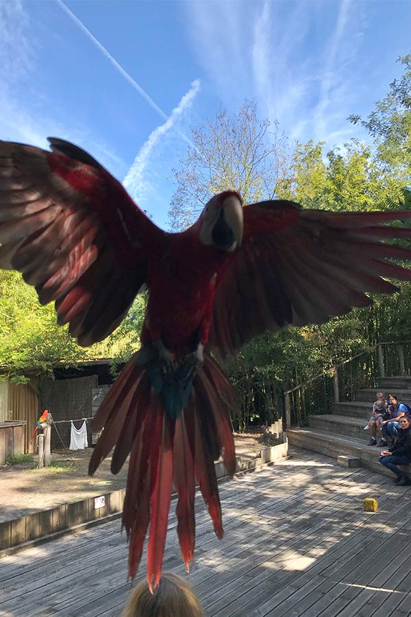 Zoo in Bordeaux